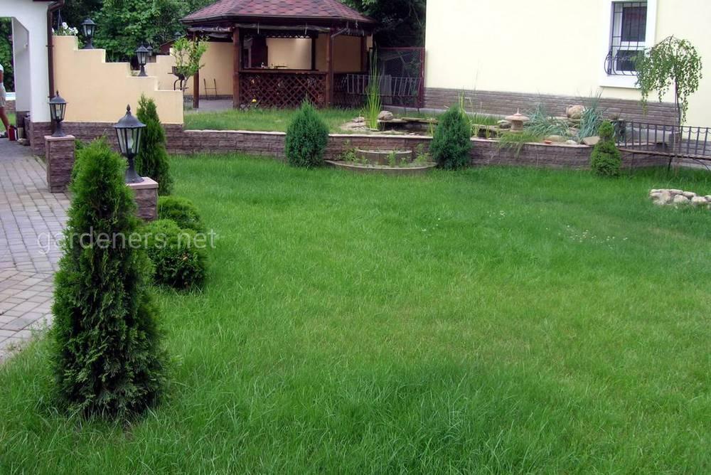Весенние подкормки газона