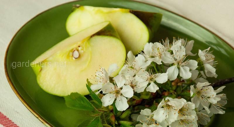 Основные правила заготовки семян и косточек фруктовых растений