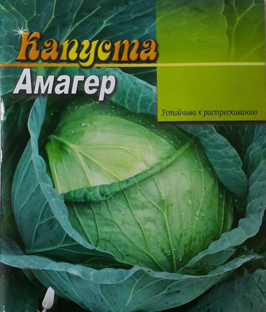 Сорт капусты Амагер