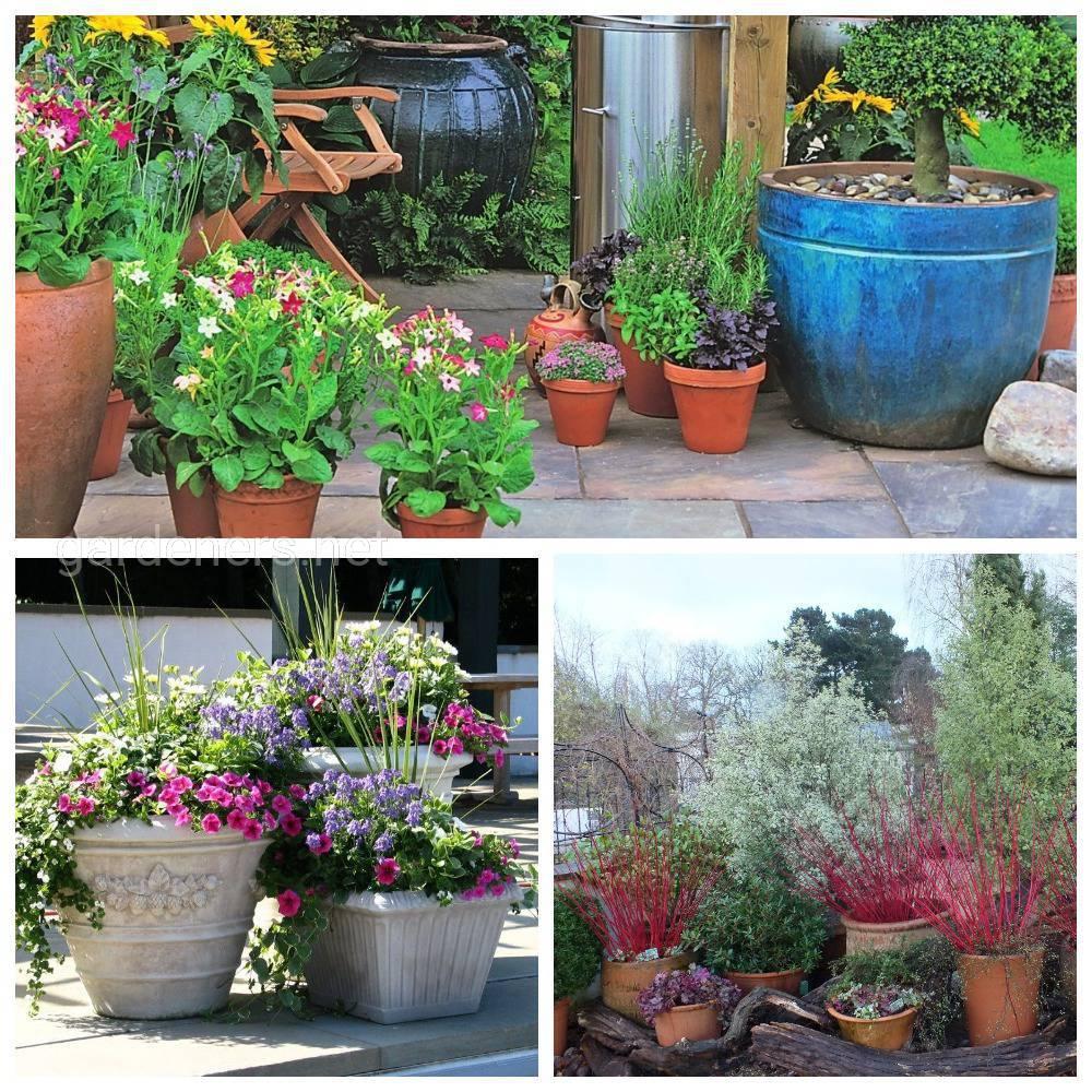 растения для контейнерного сада