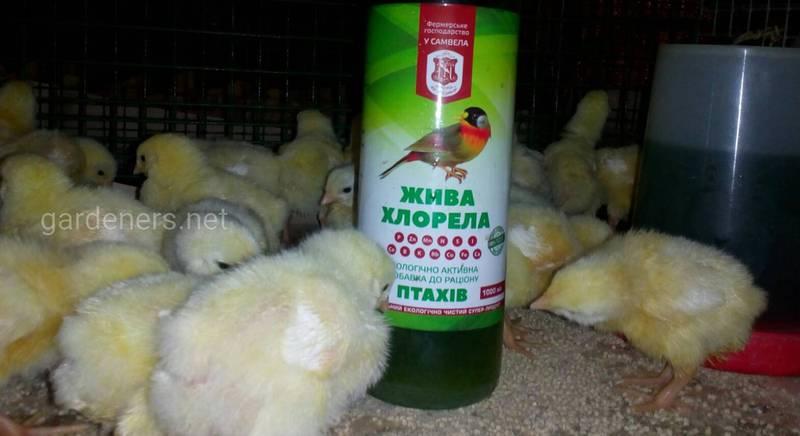 Биологическая ценность продукции экоптицеводства в фермерском хозяйстве «У Самвела»