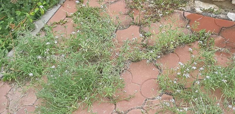 Избавляемся от сорняков в швах тротуарной плитки народными методами