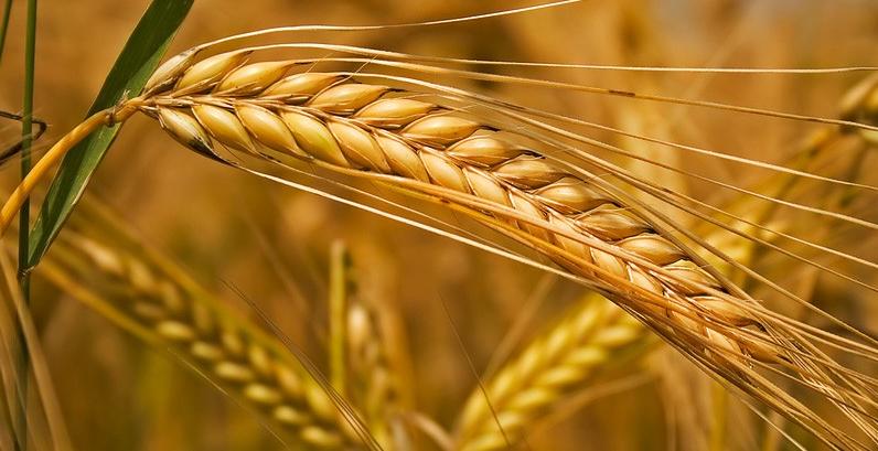 Як запобігти посуховим стресам позакореневими добривами?