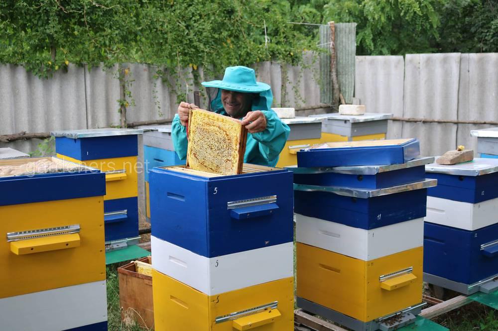 пчелы и хлорелла