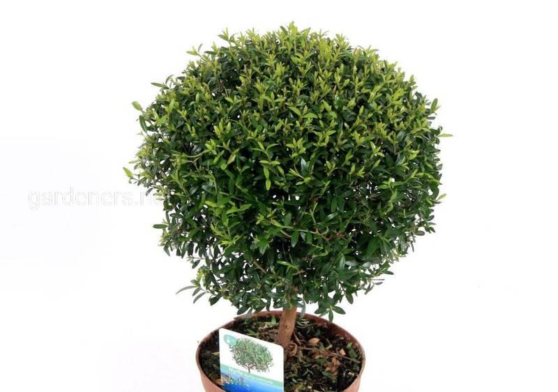 Як правильно підготувати кімнатні рослини та місце для їхньої зимівлі?