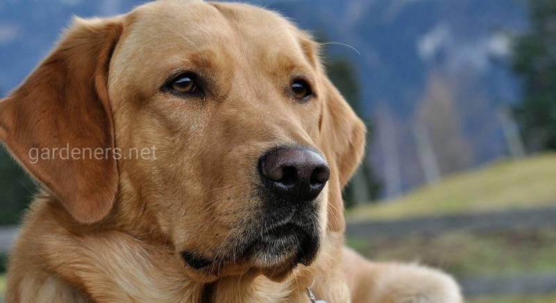 Вибір собаки для власника-початківця