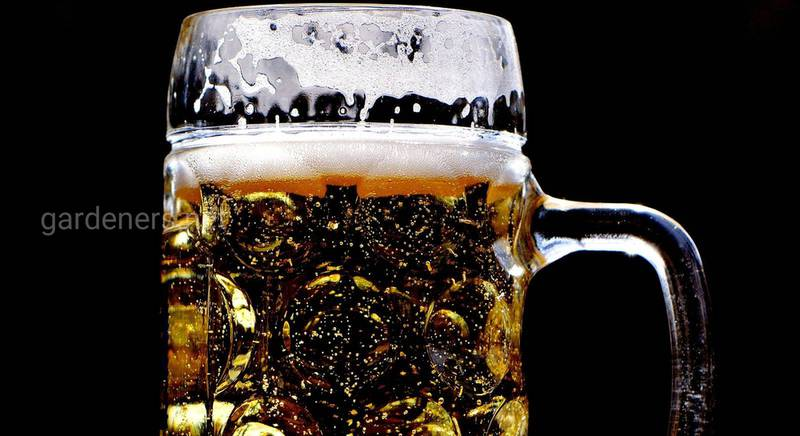 пиво з квасного сусла