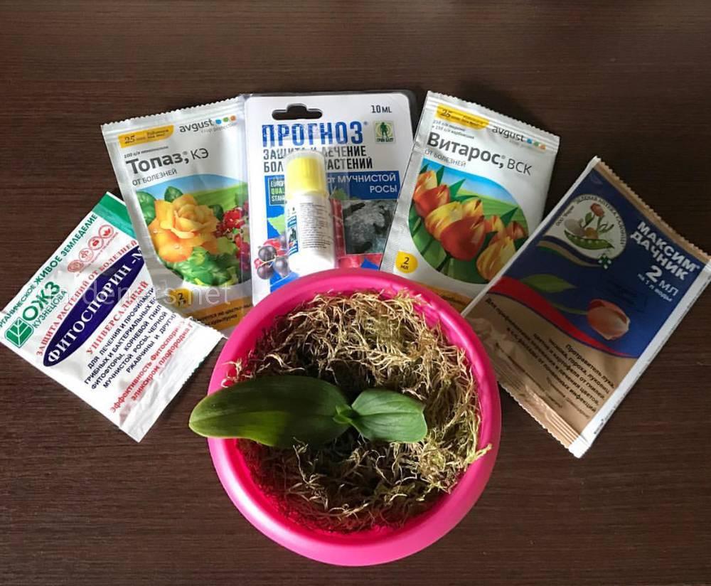 Фитоспорин-М, Максим, Витарос, Топаз