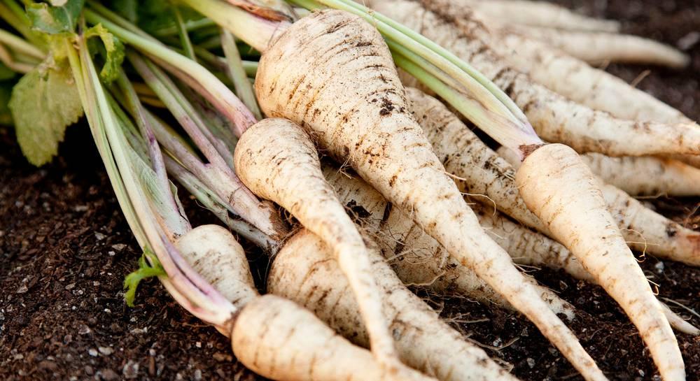 Овощи, зимующие в земле