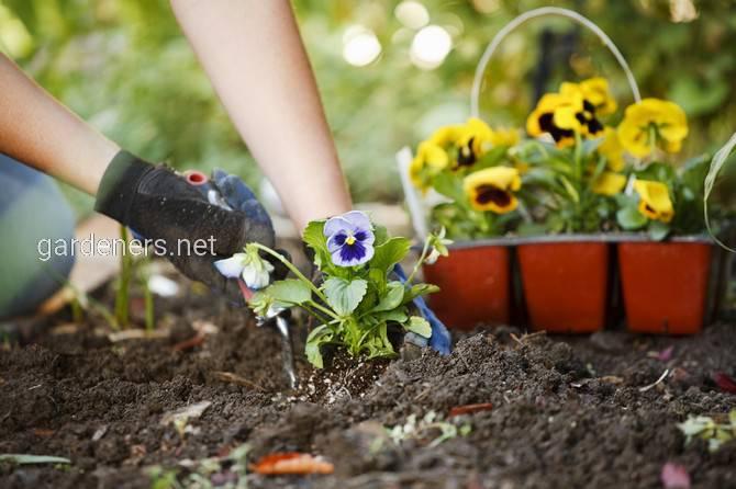 Продажа растений онлайн