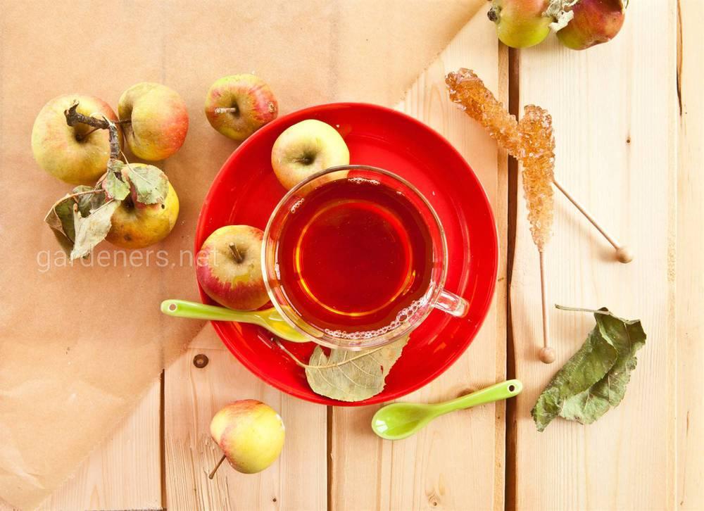Чай из побегов яблок