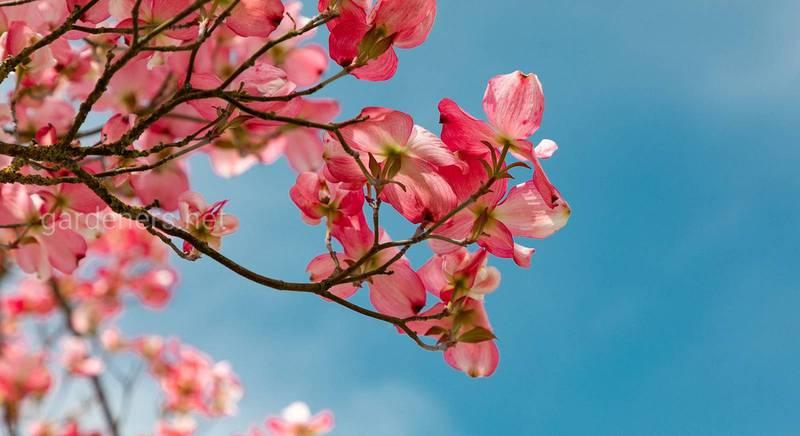 Чи потрібні дерева в саду і на що звертати увагу