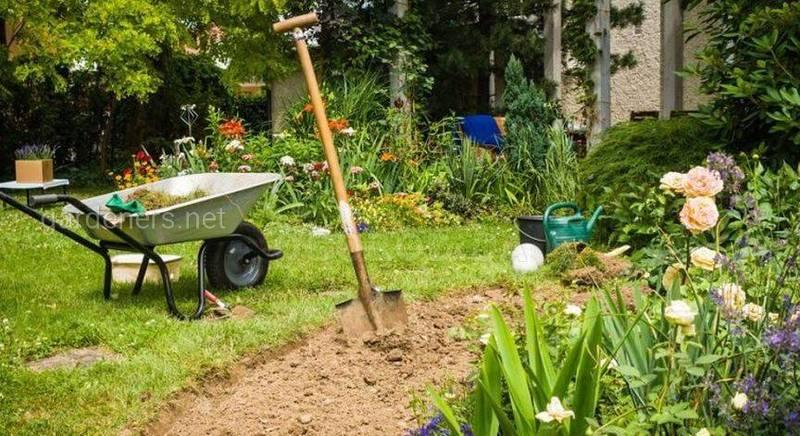 Азот, фосфор, калий – признаки недостатка и избытка у растений.jpg