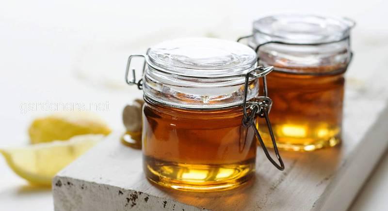 ТОП-10 популярных сортов мёда и их влияние на организм человека