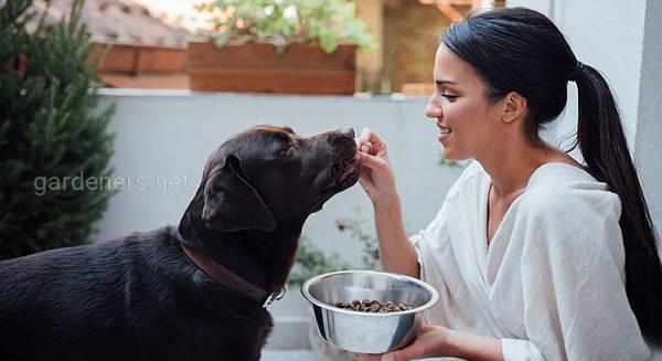 Чем кормить пожилую собаку