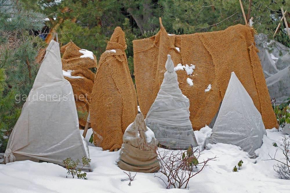 Утепляем хорошо в зиму плодовые деревья