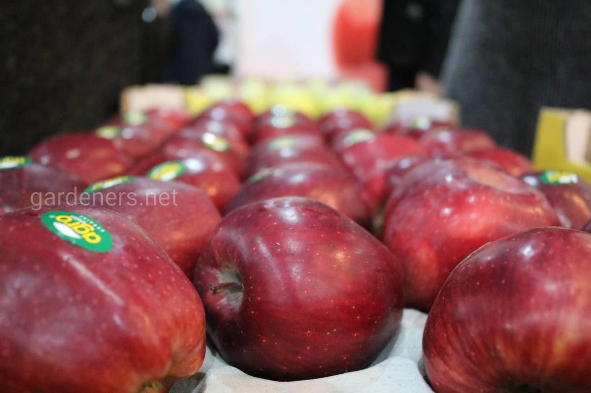 """Тов """"Агро-Еталон вирощування яблук"""