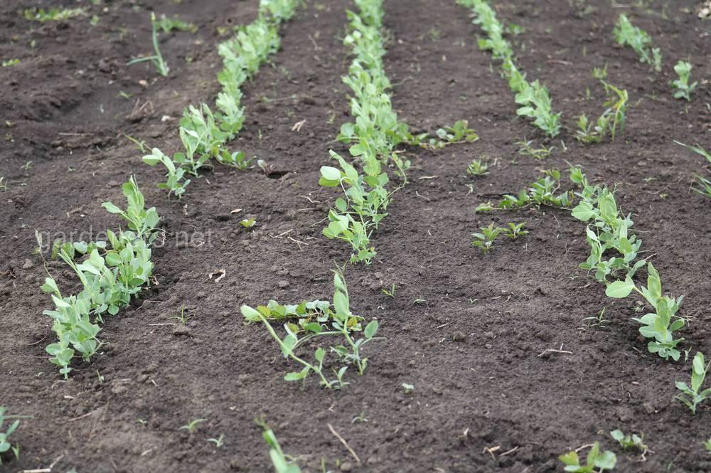 Урожай 2020 под угрозой