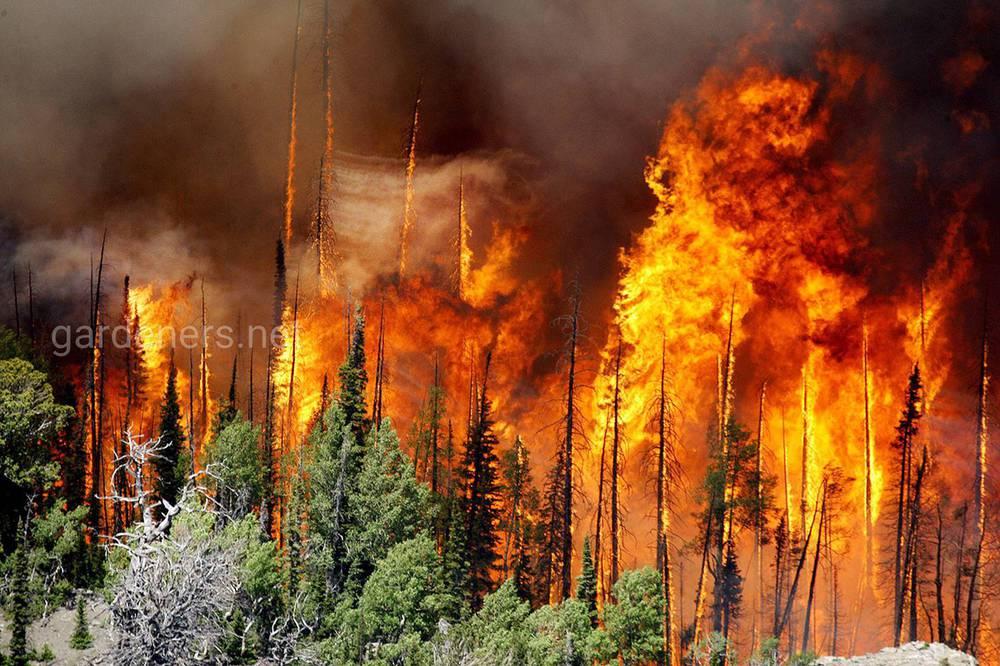 Чрезвычайно разрушительные пожары