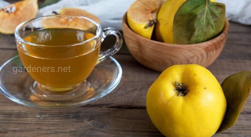 Айвовый чай - лучшее средство от диареи