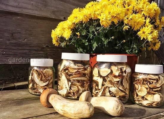 Приготовление сушёных грибов впрок