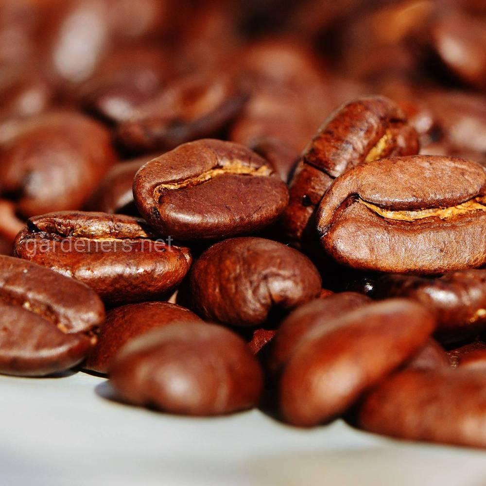 Полезные действия кофеина на человеческий организм