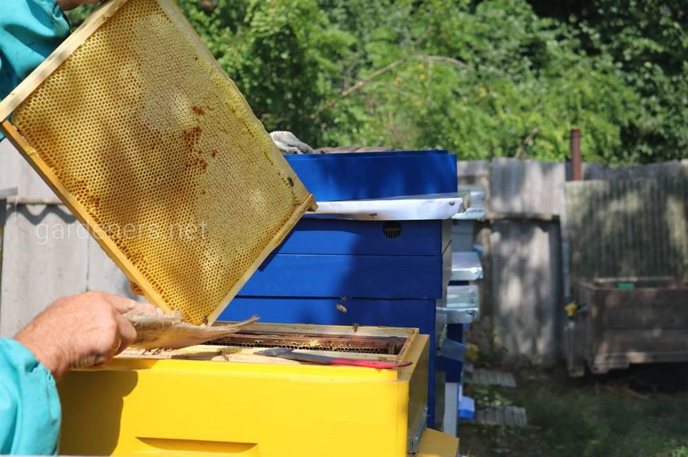 место для пчел