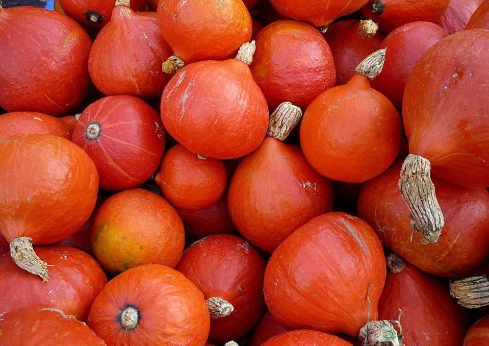 Сорт тыквы Хоккайдо оранжевый.jpg