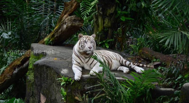 Сингапурский зоопарк: как создавался и чем занятся