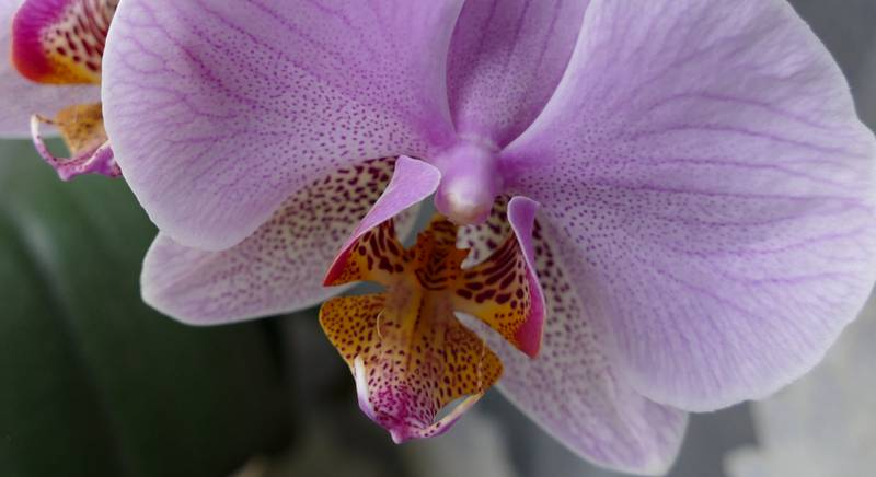 Уход за орхидеями в период цветения