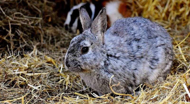 Особливості утримання декоративних кроликів