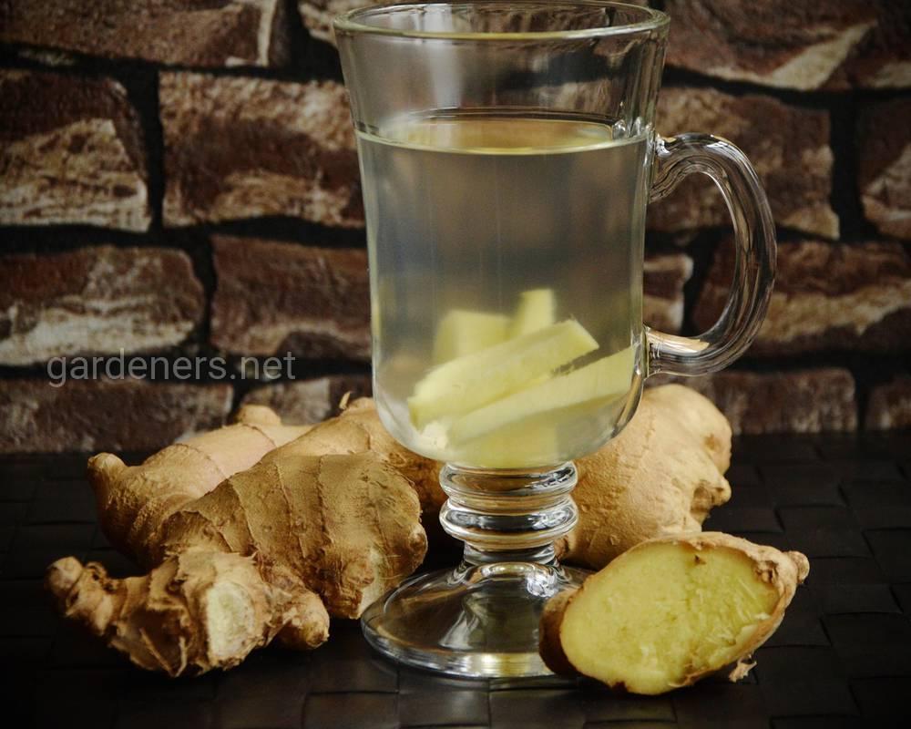 полезные свойства чая с имбирем