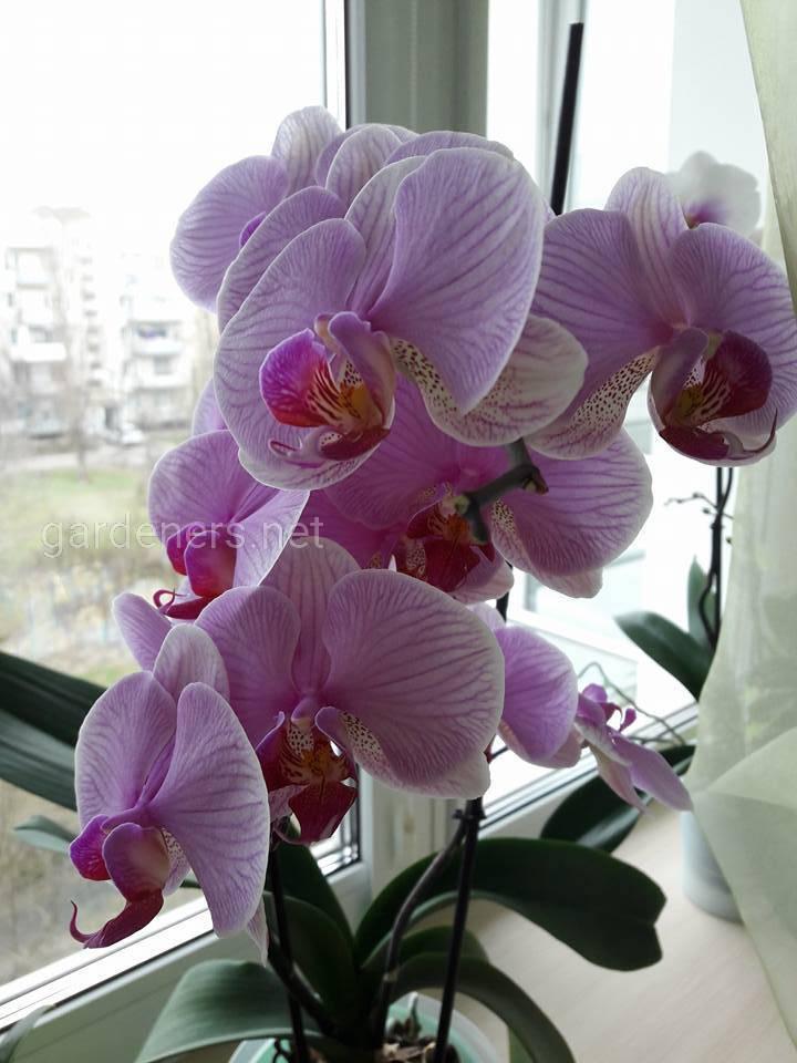 Орхидея всегда поднимает настроение