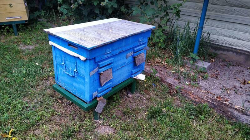 Для чого встановлюють гігієнічні поїлки та приманки для бджіл? Як боротися з варроазом?