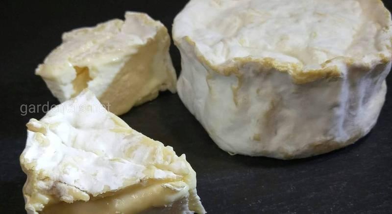День сыра