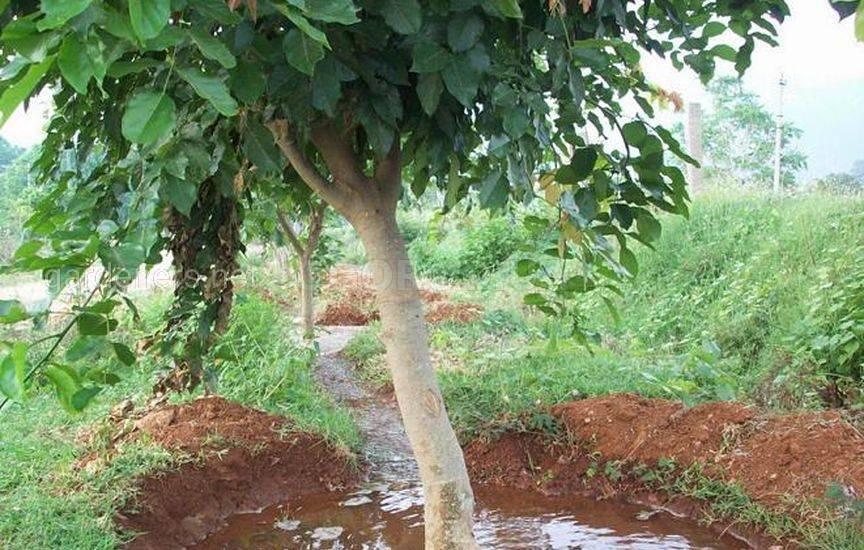 Как правильно поливать деревья и кусты в саду1