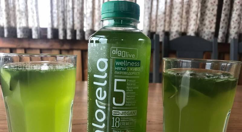 Биоактивный напиток Chlorellа - полезная основа для лимонада, коктейлей, фреша и смузи