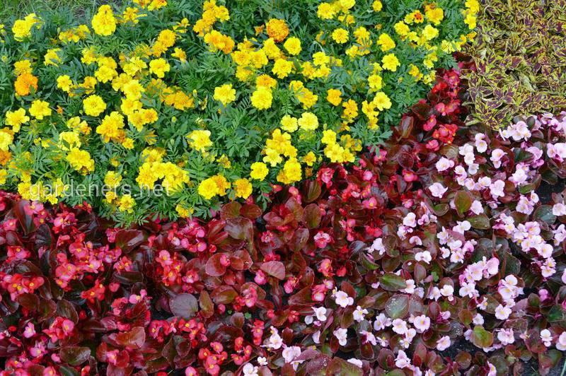 Цветники