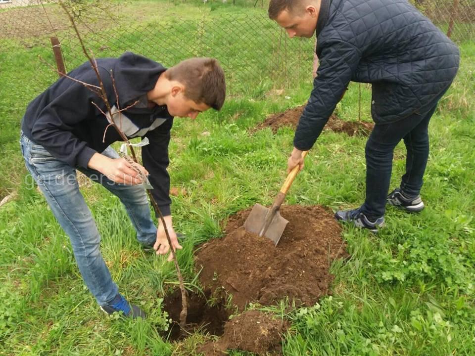 Шкільна акція Дерево на згадку