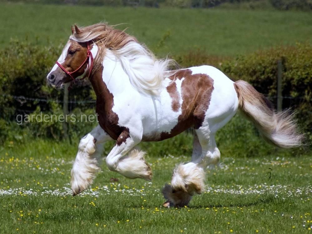 Большие лошади