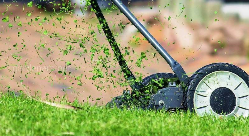 Рекомендации по выбору высококачественной газонокосилки