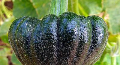plant-fruit-2796936_1920.jpg