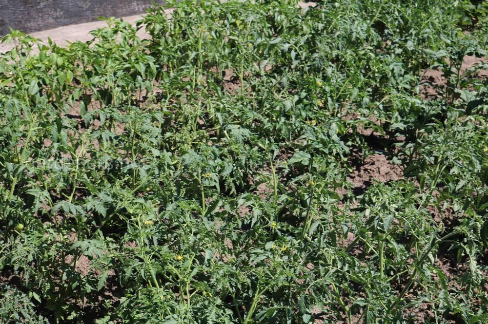 Підживлення ґрунту для городу