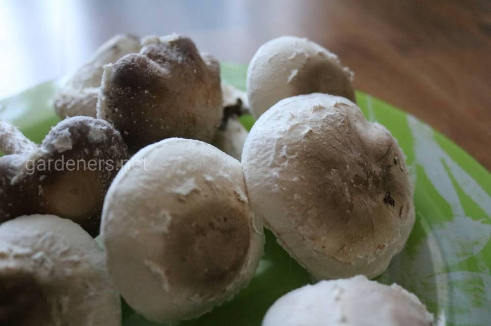 Успішне розведення гриба-шіїтаке