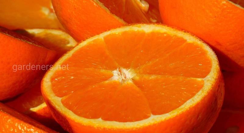 Використання апельсинових кірок в побуті: найпоширеніші методи
