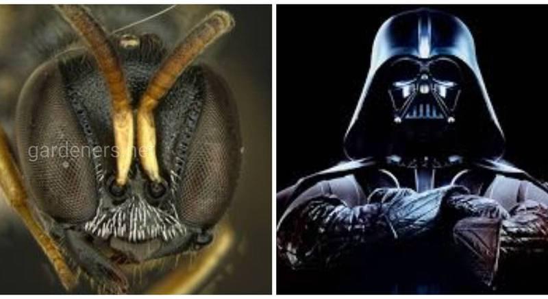 """Виды животных, названные именами героев """"Звездных войн"""". И да прибудет с вами сила таксономии!"""