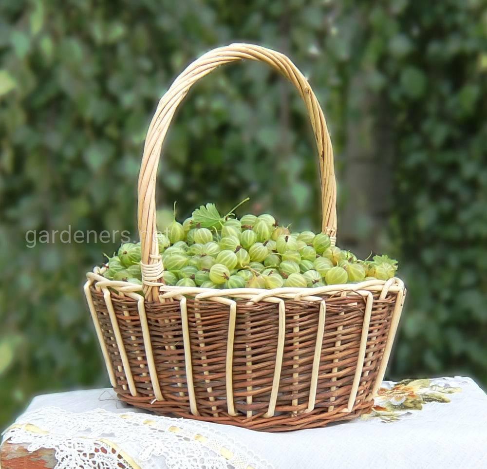 Садовая-корзина