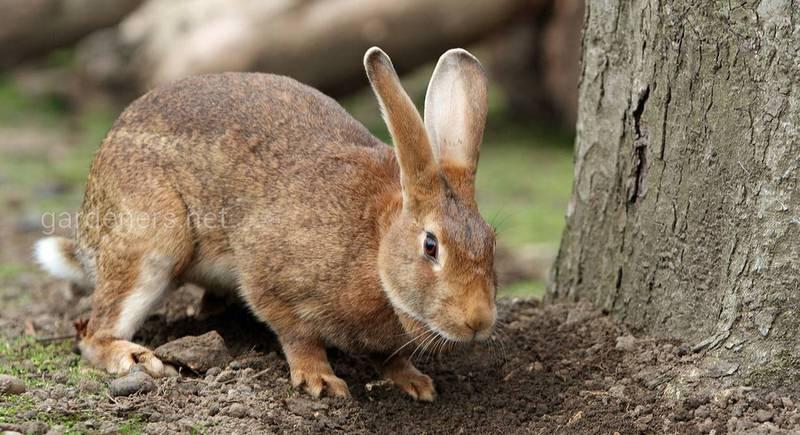 Делаем комбикорм для кроликов дома
