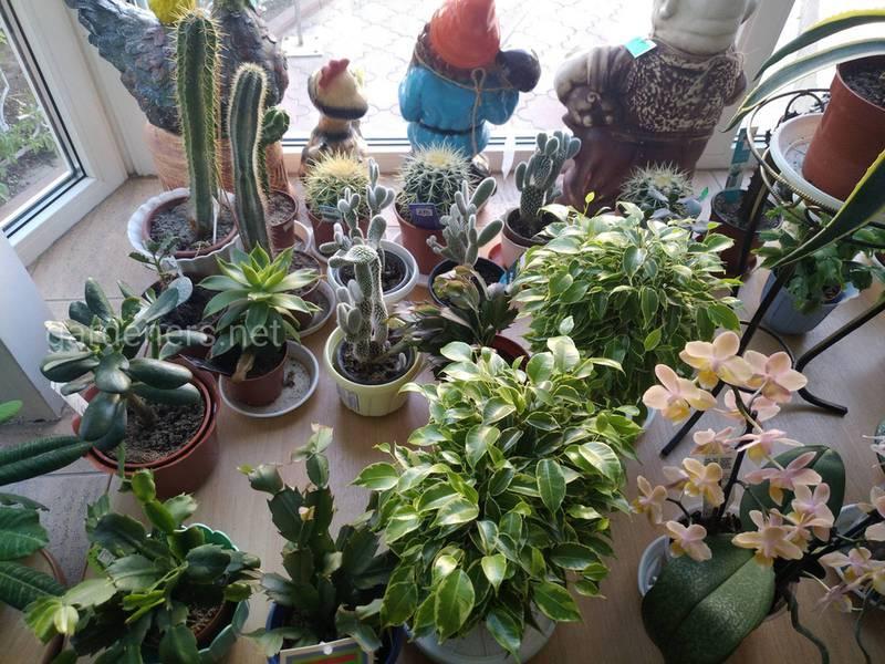 Які умови необхідні для правильного росту та розвитку кімнатніх рослин?