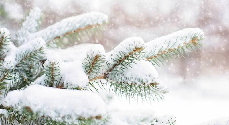Руйнівники міфів: чи потрібно утрамбовувати сніг в пристовбурних колах